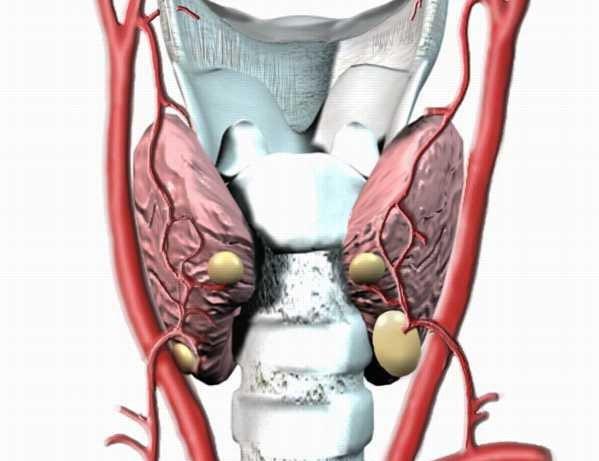 paratiroidi endocrinologiaoggi