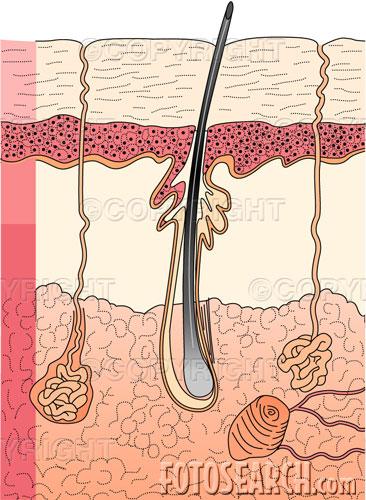 unita pilo sebacea endocrinologiaoggi